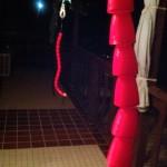 Plasti-dipped roller snakes!